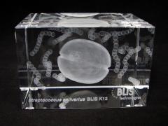 3d bacteria | S. salivarius