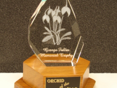 George Fuller Memorial Trophy for Orchid of the Year